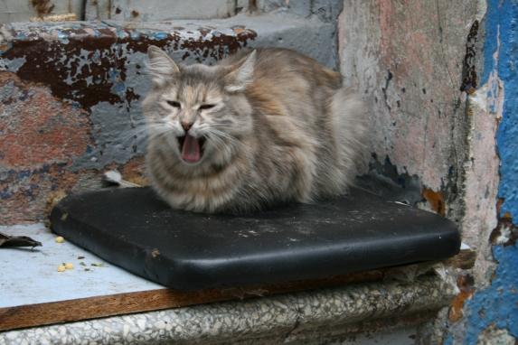 uykucu kedi, Esin Yılmazer